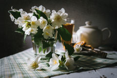 Morning still life with fresh jasmine flowers Royalty Free Stock Photos