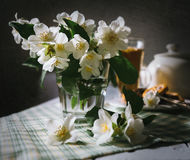 Morning still life with fresh jasmine flowers Stock Photography
