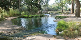 Morning Stream at Laguna Lake Royalty Free Stock Photo