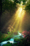 Morning Stream. Light rays shine down on a calm forest stream Stock Image