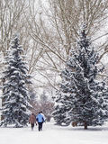 Morning stroll on a snowy day. Adult family taking a walk on a snowy Canadian Christmas Eve morning Royalty Free Stock Image