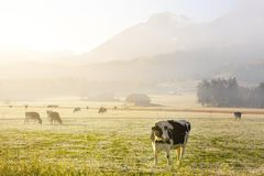 Morning in suisse Alps. stock image