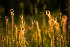 Morning summer grass bathing in first sun rays. Strong contrast and shadows Royalty Free Stock Image
