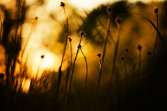 Morning summer grass bathing in first sun rays. Strong contrast and shadows Stock Photos