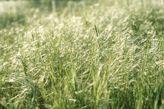 Morning summer grass bathing in first sun rays. Strong contrast and shadows Stock Images