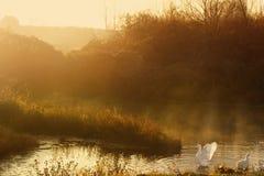 Morning summer landscape Stock Photo