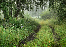 Morning summer landscape with a dirt road and fresh green grass Stock Photography