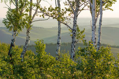 Morning summer landscape. Sunrise in mountains. Nature of Siberia. Stock Photography