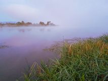 Misty foggy lake. Morning summer nature misty foggy white scene royalty free stock photo