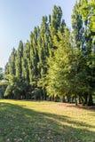 Morning in summer park stock photos