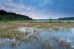 Morning on summer swamp Royalty Free Stock Photos