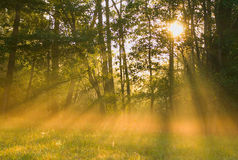The morning sun Royalty Free Stock Image