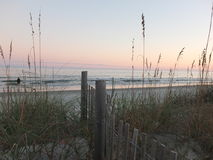 Morning Sun. Beach grasses and color against the morning sky in South Carolina Royalty Free Stock Photo