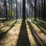 Morning sun beams in the autumn forest Stock Photography