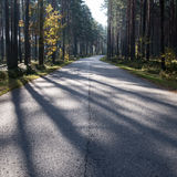 Morning sun beams over autumn road Stock Photos