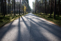 Morning sun beams over autumn road Royalty Free Stock Image