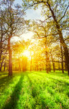 Morning sun beams in the spring park Stock Photography