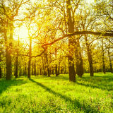 Morning sun beams in the spring park Stock Image