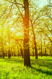 Morning sun beams in the spring park Royalty Free Stock Photography
