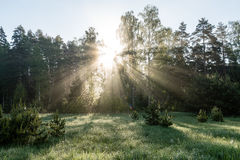 Morning sun beams in the summer forest Stock Photography