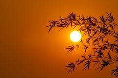 Morning Sun Stock Photo