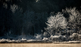 Morning sun dawns on ice and frost covered wetland trees and foliage. Stock Photos