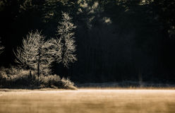 Morning sun dawns on ice and frost covered wetland trees and foliage. Stock Photography