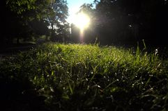 Morning sun and dew on the grass. Morning sun breaks through branches of trees. Dew on green grass is reflected in the sun`s beam Royalty Free Stock Image