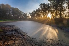 Morning sun enters the deciduous forest Royalty Free Stock Photos