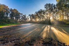 Morning sun enters the deciduous forest Stock Photo