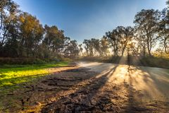 Morning sun enters the deciduous forest Stock Images