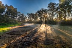Morning sun enters the deciduous forest Royalty Free Stock Photo