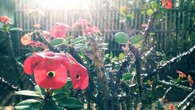 Morning Sun Flower stock photo