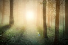 Morning sun on the foggy forest somewhere in europe. Morning fog on the forest somewhere in europe. Fog, sun and trees Royalty Free Stock Image