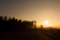 Morning sun. Foggy forest in the morning sunlight Royalty Free Stock Images
