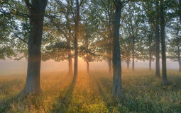 Morning Sun. In the forest Stock Images