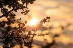 Morning sun in garden stock image