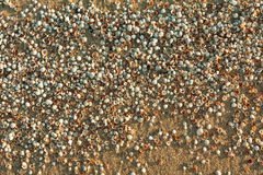 The morning sun illuminates the seashells Royalty Free Stock Image