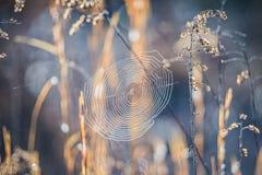 Morning sun illuminating spider web oon a lawn Royalty Free Stock Photo