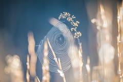 Morning sun illuminating spider web oon a lawn Stock Photography