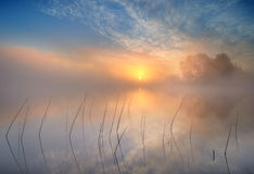 Morning sun. On a lake with reeds in the foreground Stock Images