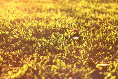 Morning sun on the lawn. Warm tone Morning sun on the lawn Stock Photography