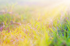 Morning sun Royalty Free Stock Photography