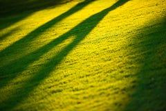 Morning Sun Light Stock Image