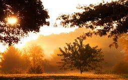 Morning sun light Royalty Free Stock Photography