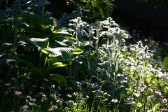 Fragment of a modest garden. Light and shade. Royalty Free Stock Photography