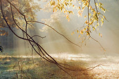 Morning Sun Rays. Early on a fall morning in rural Tennessee. Catching the morning sun rays through the trees royalty free stock photos