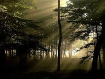 morning sun rays entering into misty forest Royalty Free Stock Photos