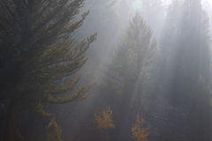 Morning sun rays in the fog Royalty Free Stock Photography