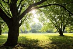 Morning sun rays Royalty Free Stock Photos